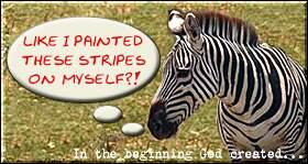 zebrastripes.jpg